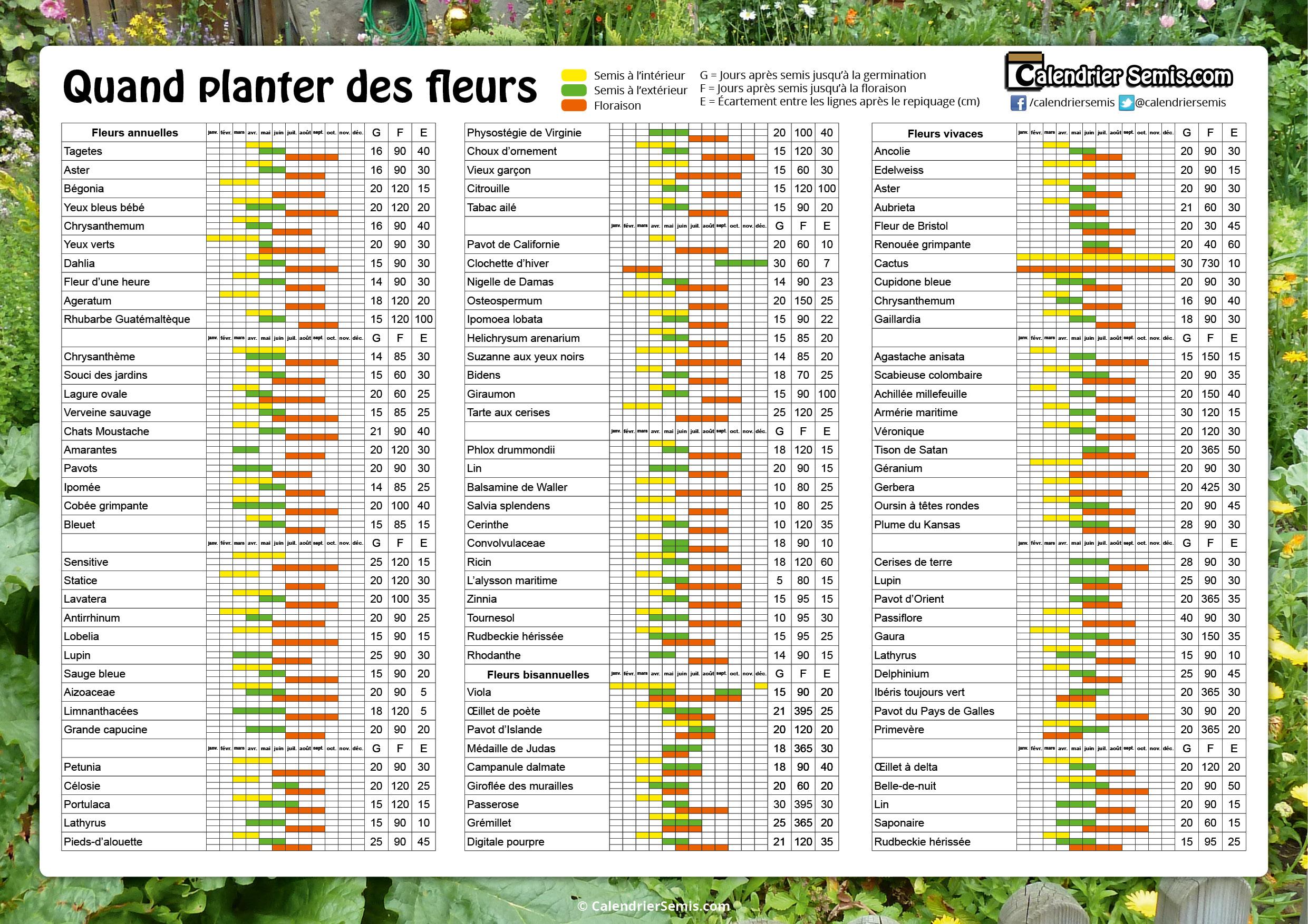 Jardinage fleur for Le jardin quand planter